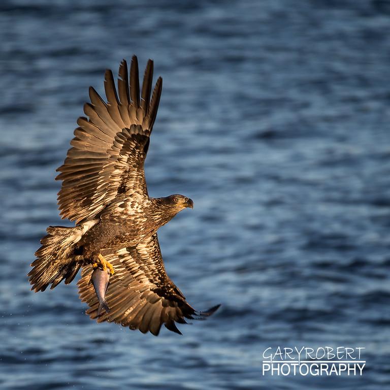 Eagles-6159