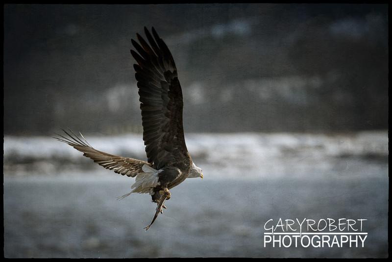 Eagles-7222_oil-3