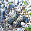 Killdeer Nest at Thousand Trails Kenisee Lake<br /> Jefferson, OH