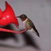 Male Hummingbird at the feeder