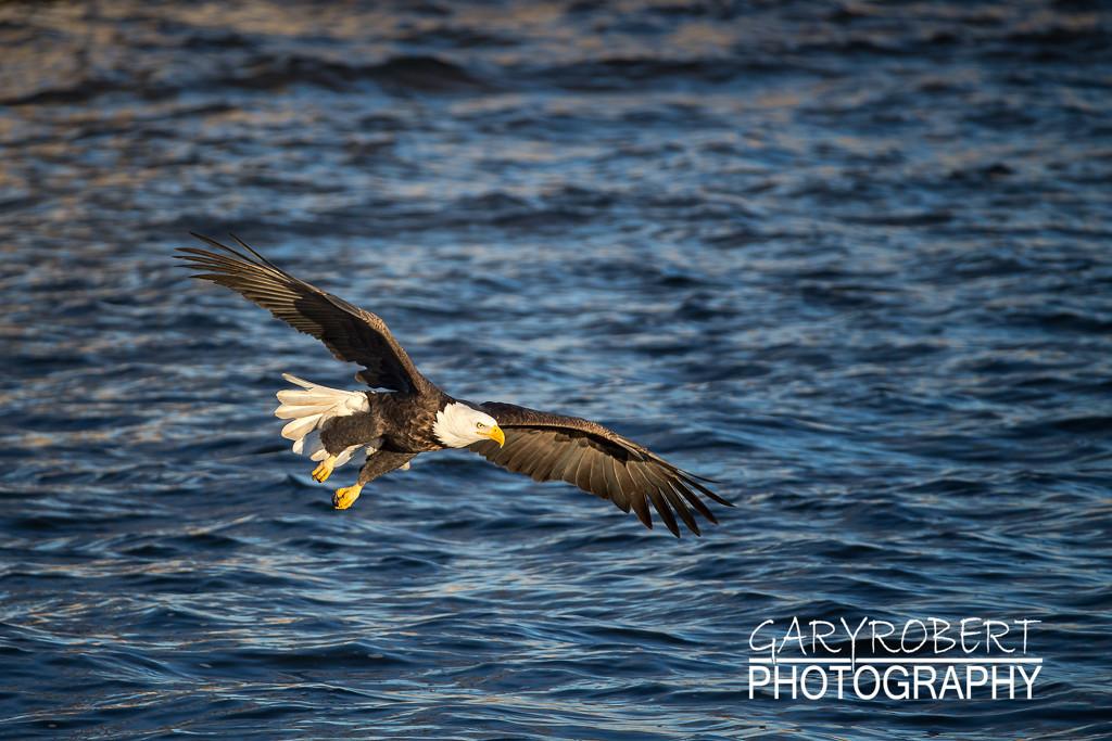 Eagles-5985