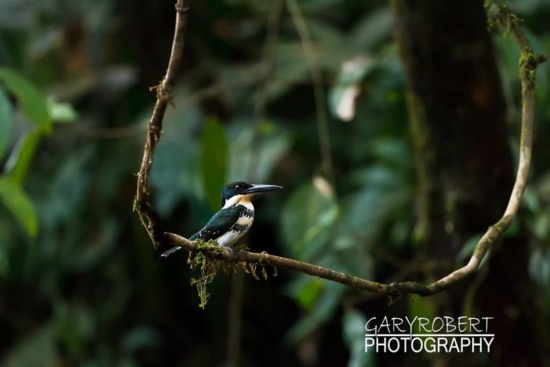 Costa Rica-1146