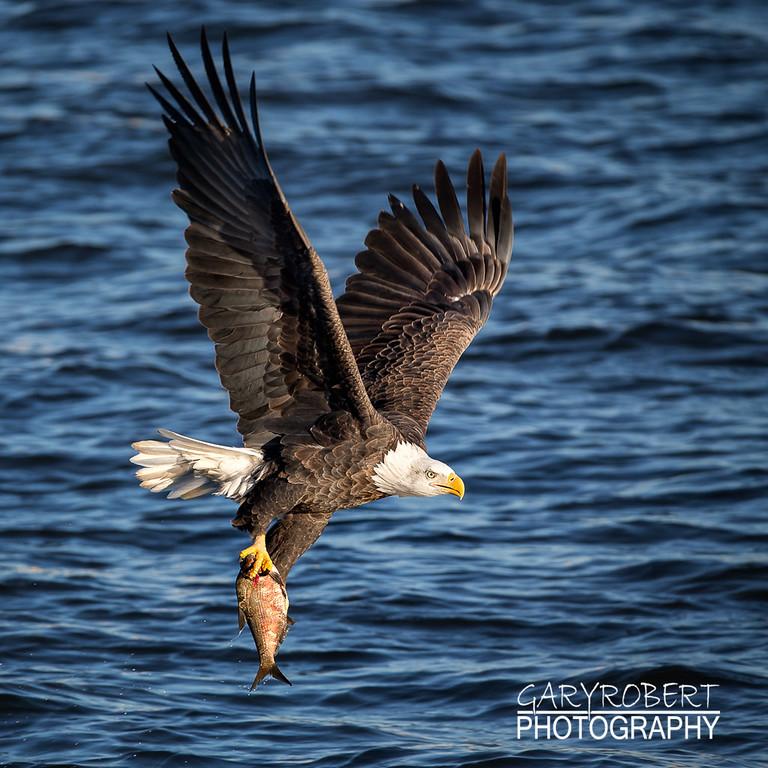 Eagles-5692