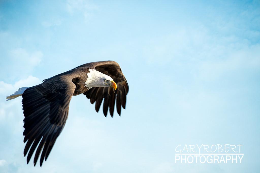 Eagles-5469