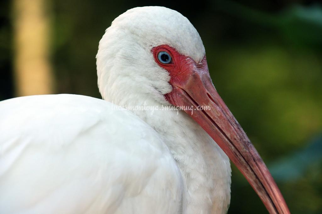Flamingo Gardens in Ft. Lauderdale, FL - December 2013