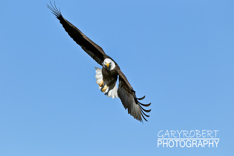 Eagle-6328
