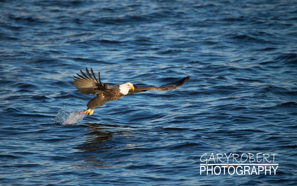 Eagles-5988
