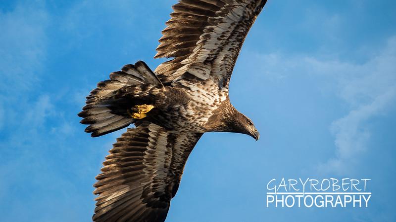 Eagles-5611