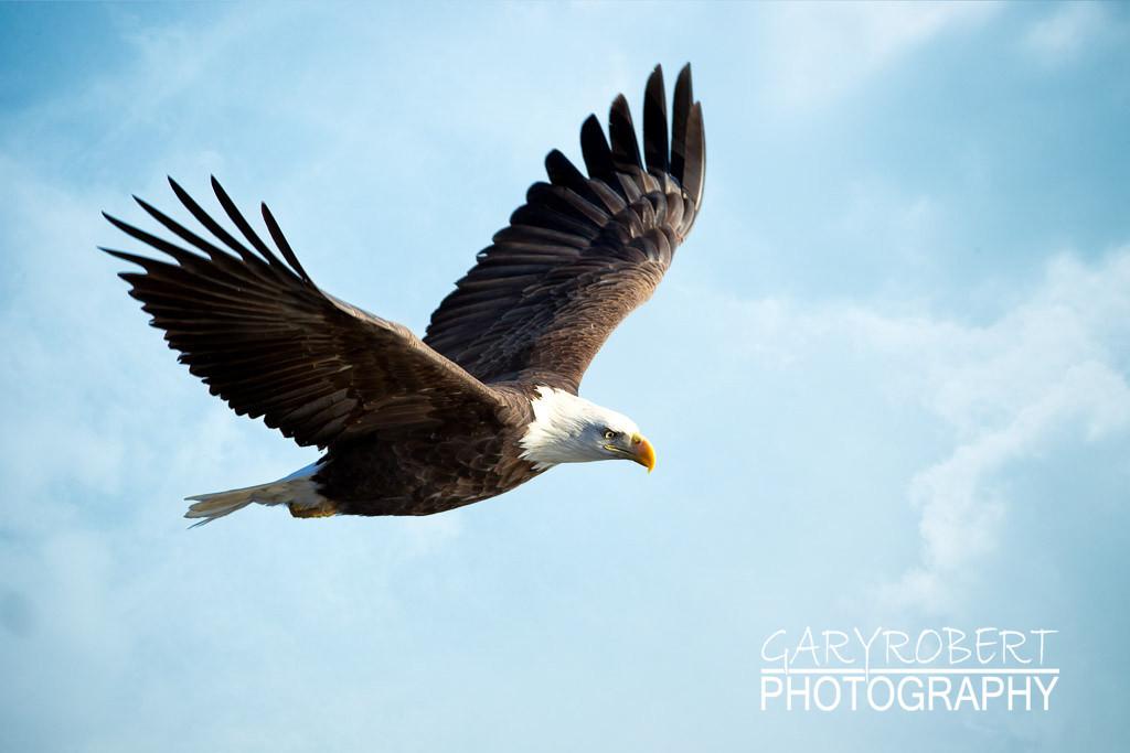 Eagles-5467
