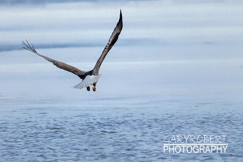 Eagles-7596_oil