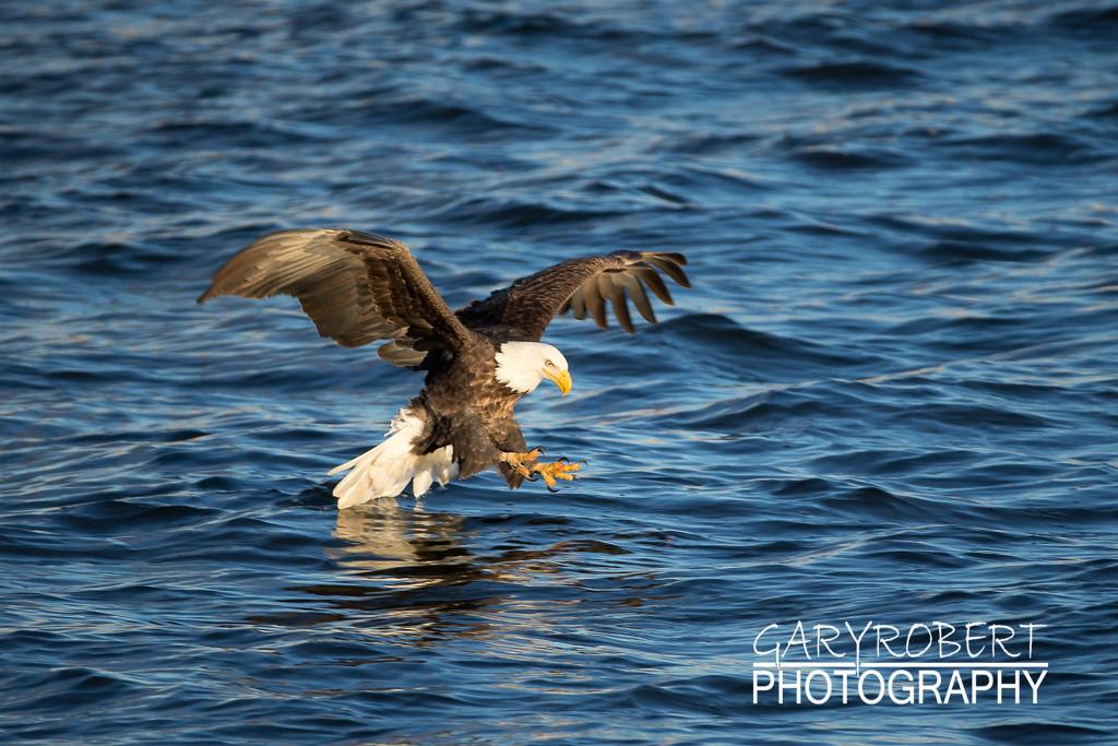 Eagles-5986