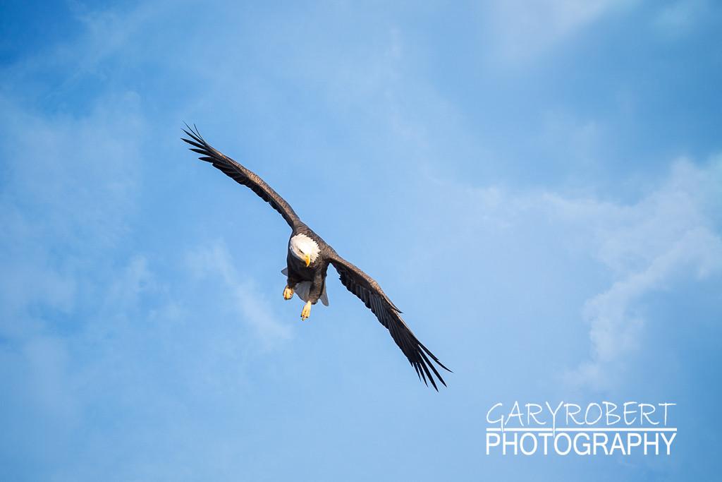 Eagles-5647