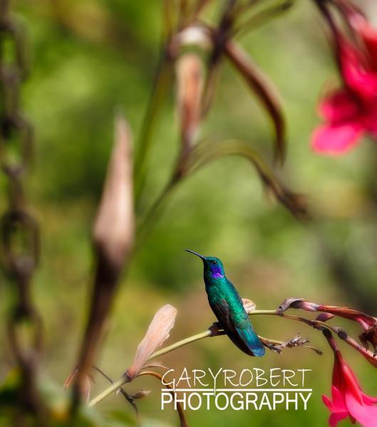 Costa Rica-0629-2