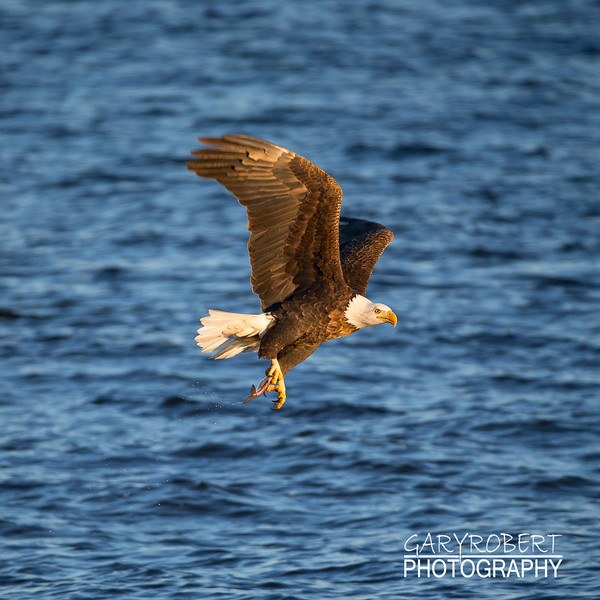 Eagles-6092