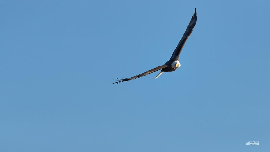 Eagle-9355