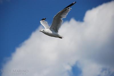 Birds - Miscellaneous
