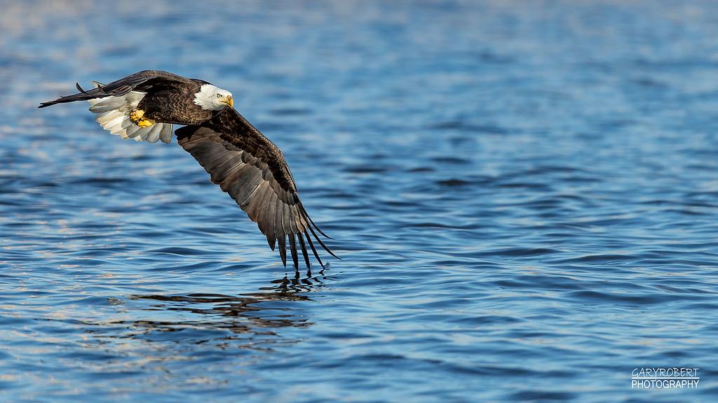 Eagle-9830_