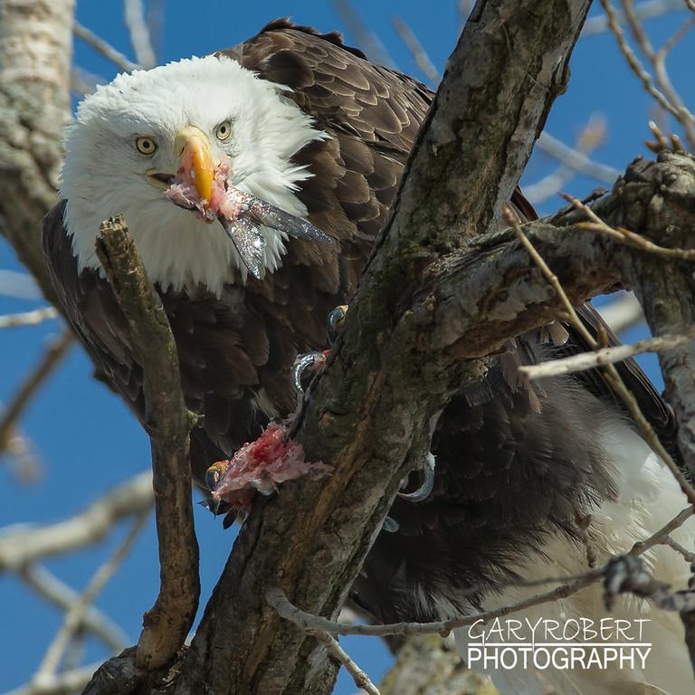 Eagles-7296