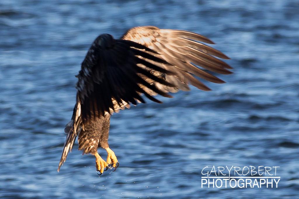 Eagles-5782