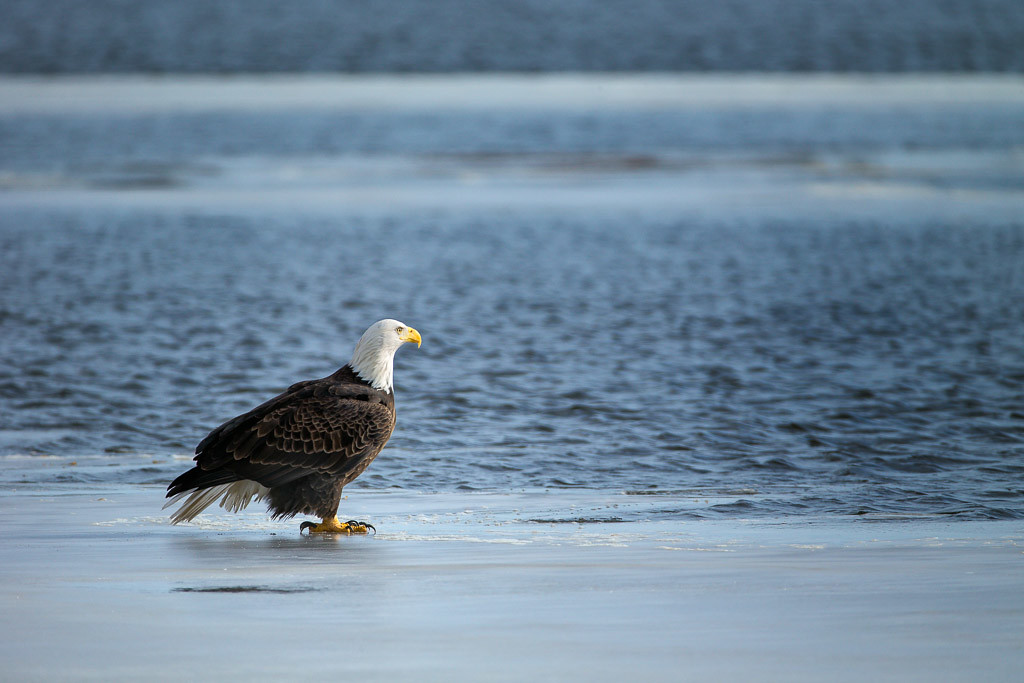 Eagles-7578