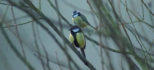 DSC08984-bird4