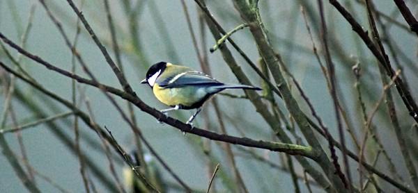 DSC08971-bird2