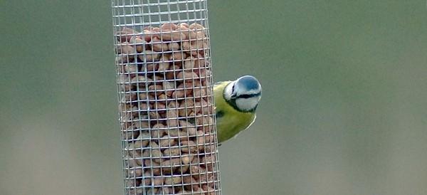 DSC08970-bird1