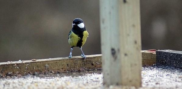 DSC08975-bird3a