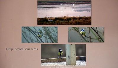 Birds2 - Room - Screen Grab