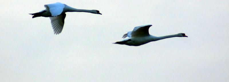 DSC09000-bird7