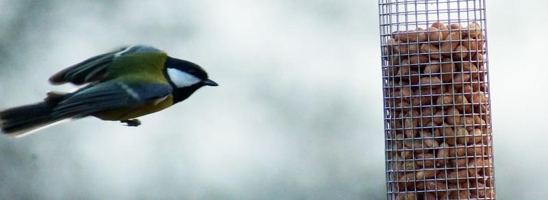 DSC08996-bird7