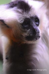 Zoo Primate 5164web