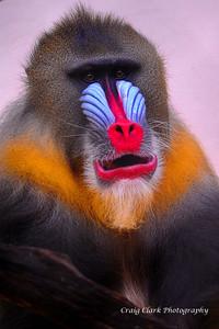 Zoo Primate 5144web