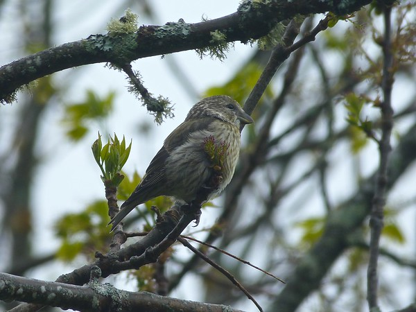 Birds April-June 2018