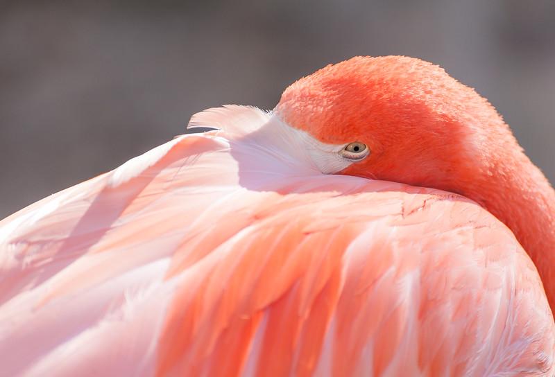 San Diego Zoo - November, 2012