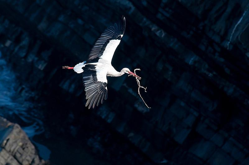 Volando entre acantilados