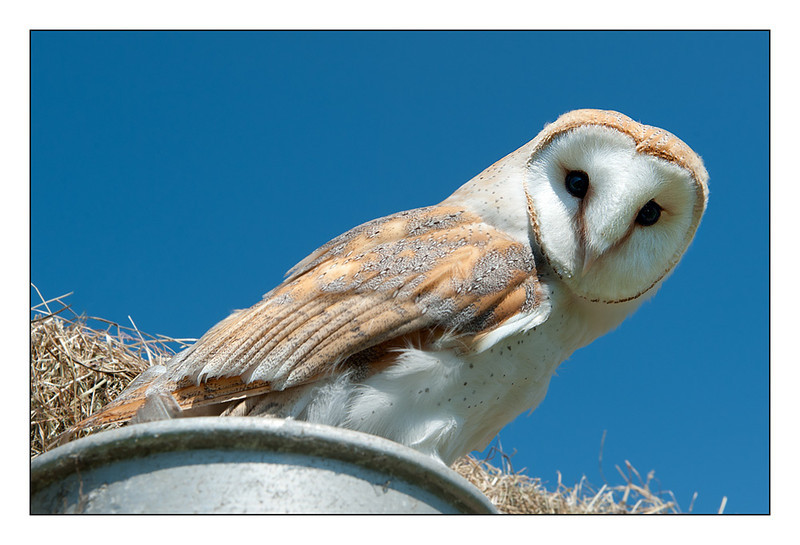 Broadwings Bird of Prey Centre