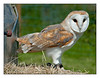 Broadwings Bird of Prey Centre