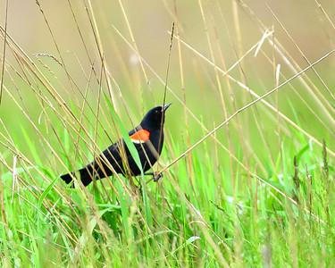 Birds - D4