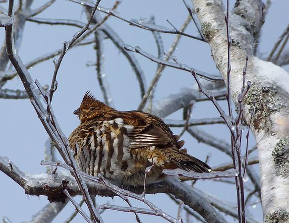 Birds January March 2014