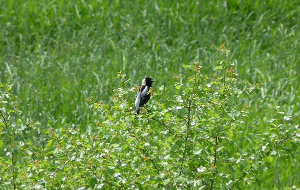 Birds June 2011
