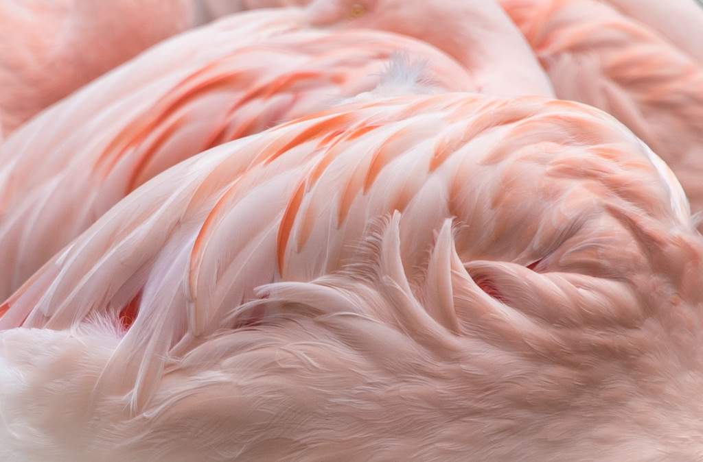 Flamingo, 2015<br /> <br /> ©Gerald Diamond<br /> All rights reserved