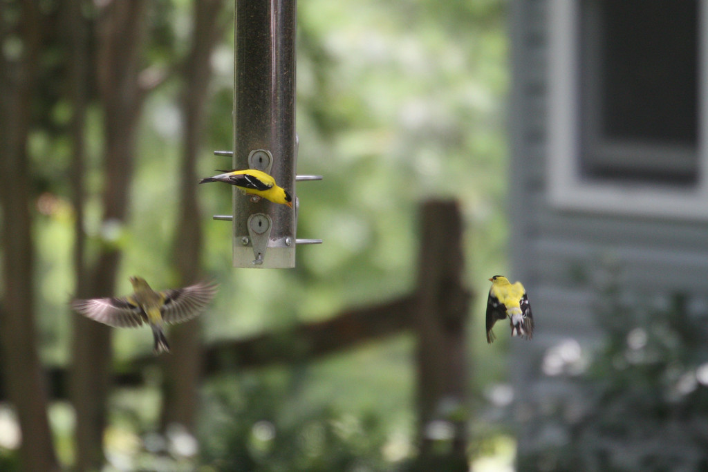 Goldfinch helicopters