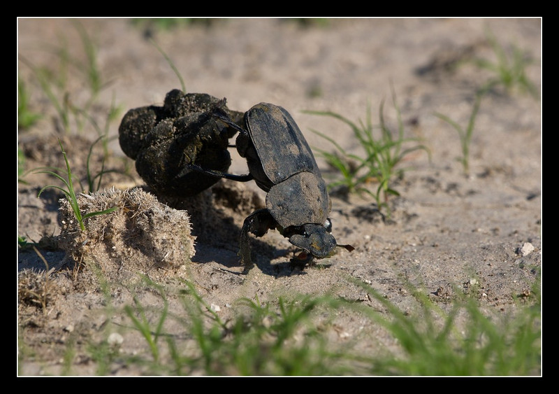 There was a lot of small-scale life to observe and dung beetles are always worth a look as they work away at gathering their prizes.