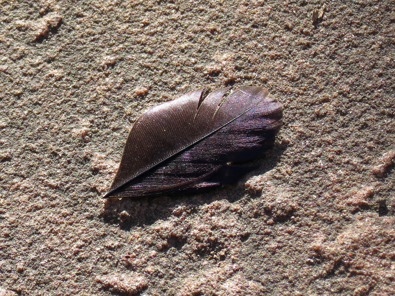 A small black feather on red sandstone in late afternoon sunlight.