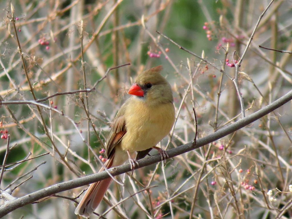 Cardinal on December 3.