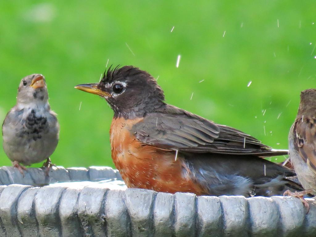 Robin and Friends in bath.