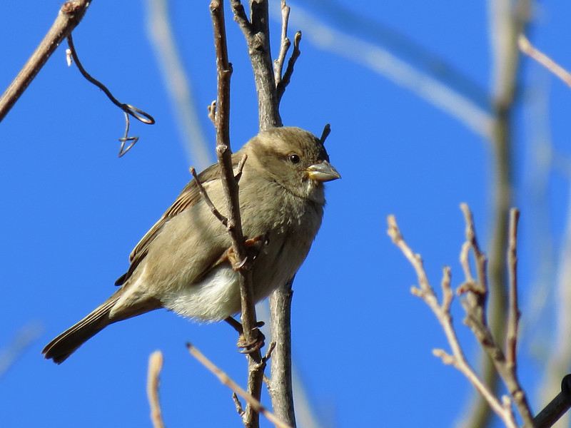 Small bird against the blue sky on a cold winter morning.