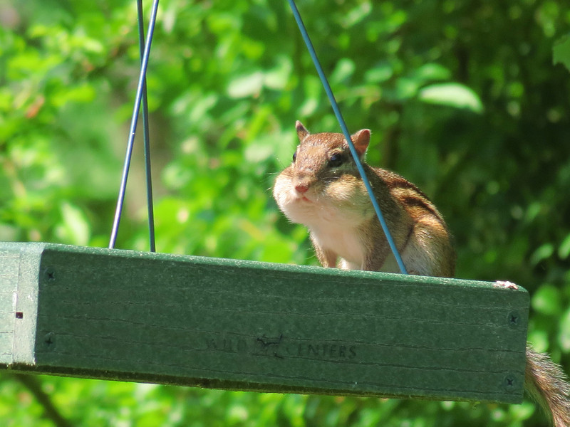 """""""I'm not eating the bird seed... I have chubby cheeks."""""""
