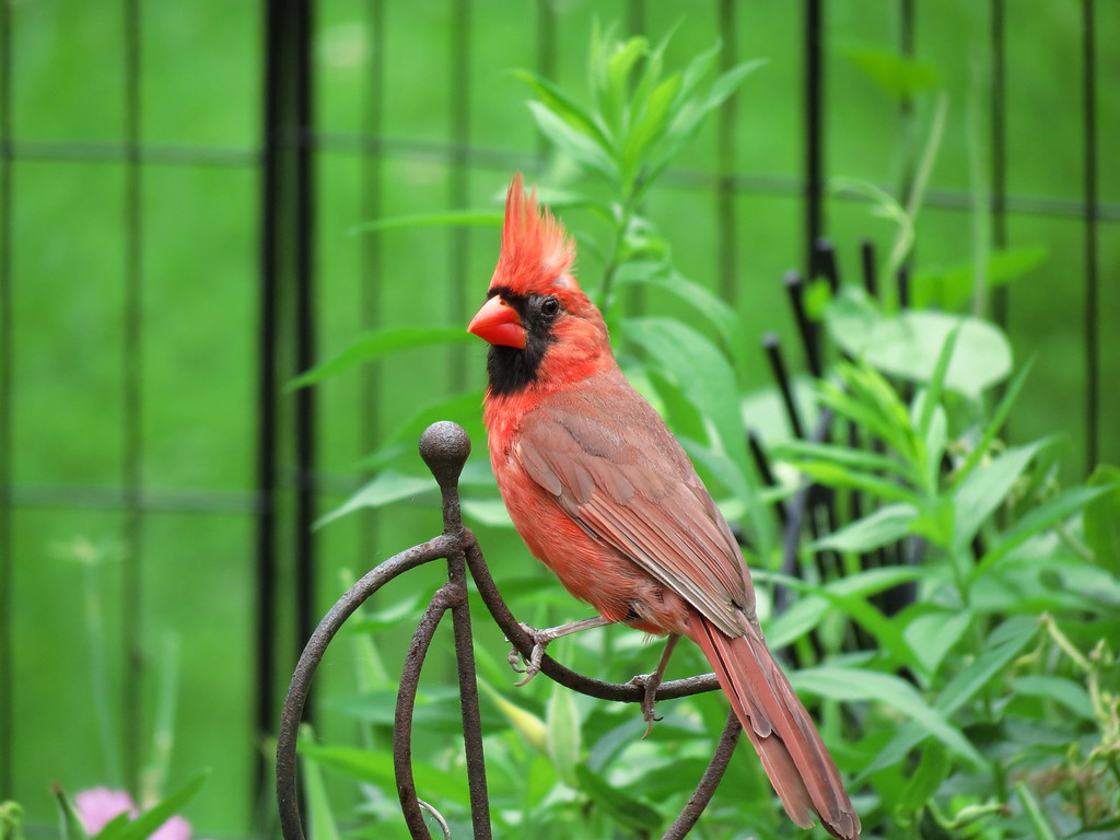 Guilty Cardinal